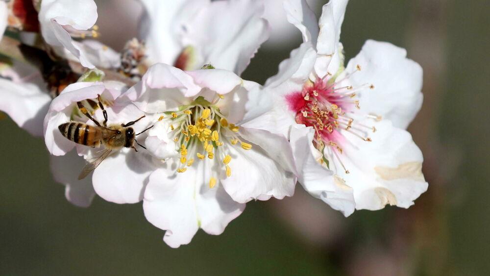 La Bayer perde il ricorso, resta in Ue il bando parziale dei pesticidi neonicotinoidi