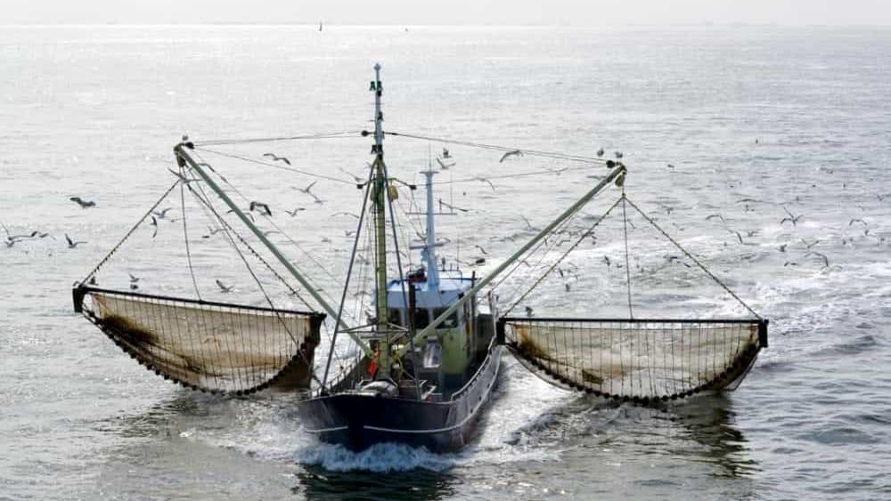 La Corte Ue accusa l'Olanda di aver mentito sull'impatto della pesca elettrica