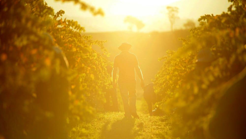 Sostenere i sistemi agroalimentari eco-compatibili creando una rete Ue