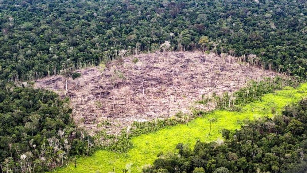 Ue seconda solo alla Cina per responsabilità nella deforestazione del Pianeta: l'accusa del Wwf