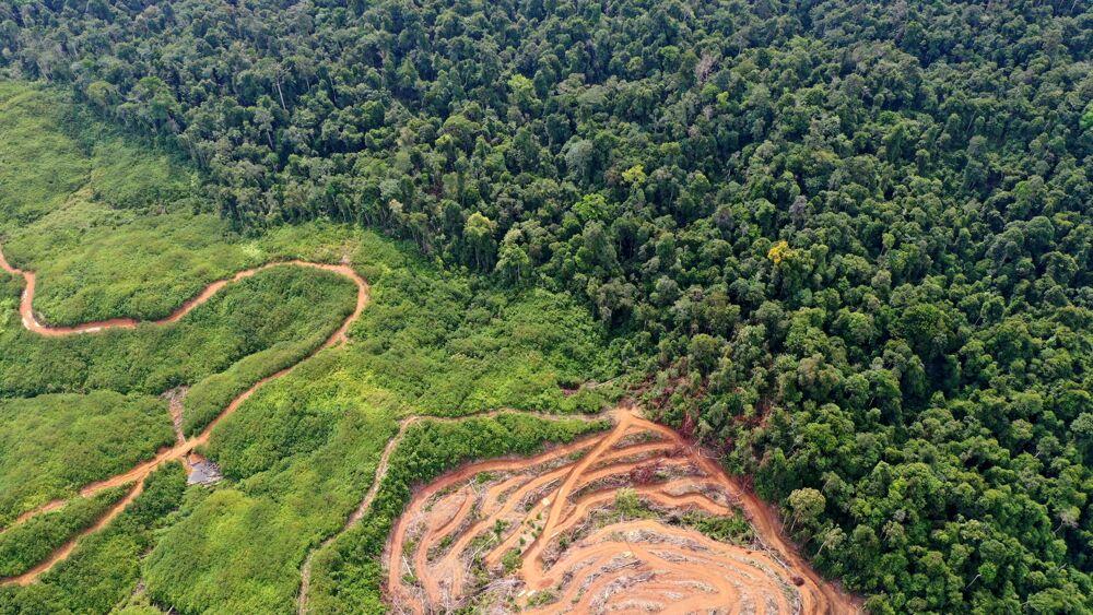 """""""Solo il tre per cento degli ecosistemi mondiali è ancora intatto"""""""