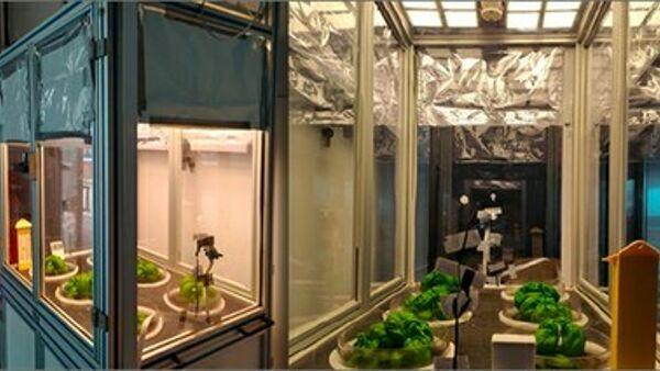 Far cresce le piante illuminando casa (e risparmiando energia): ecco gli Oled progettati a Portici