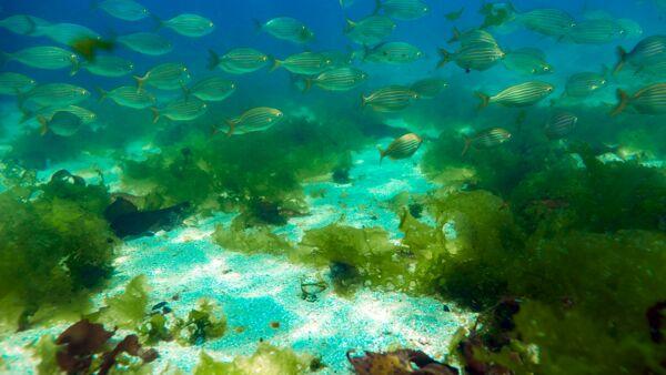 Anche il settore finanziario più aiutare una ripresa sostenibile degli oceani