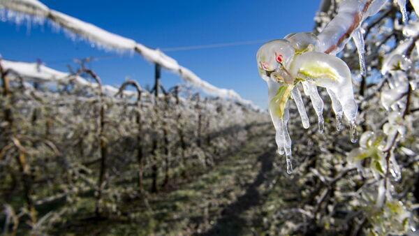 Parigi stanzia un miliardo per aiutare gli agricoltori colpiti dalla gelata