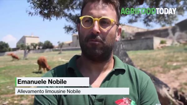 """Tg AgriFoodToday: """"Con un'app mi prendo cura di mucche e tori"""""""
