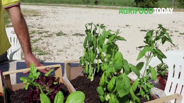 """Il metodo Montessori tra i campi: """"Insegniamo ai bimbi a cucinare con i prodotti della terra"""""""