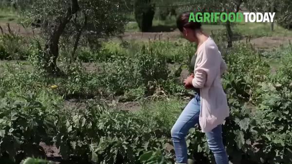 """""""Nel mio orto i semi antichi conservati dagli anziani del territorio"""""""