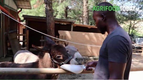 Da migrante a imprenditore agricolo in Italia, la storia di Jefferey