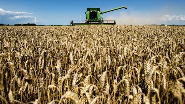 Tradizione e innovazione, ecco come cambia il grano di Altamura