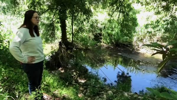 """Nel fiume """"dimenticato"""" di Palermo crescono nespole e banane"""