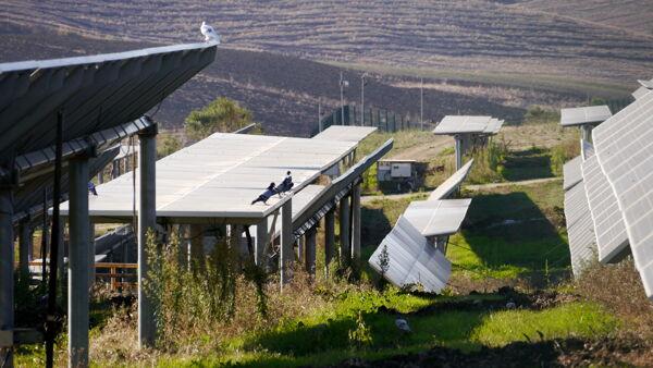 Coltivare sotto i pannelli solari: la sfida italiana dell'agrivoltaico da 1 miliardo di fondi Ue
