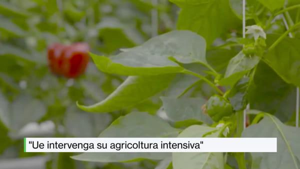 Tg AgriFoodToday: dalla coca al cacao, la riconversione agricola dell'America Latina mira al mercato Ue