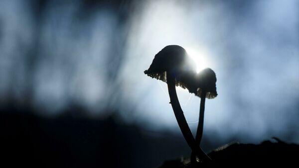I funghetti allucinogeni potrebbero essere usati per combattere la depressione