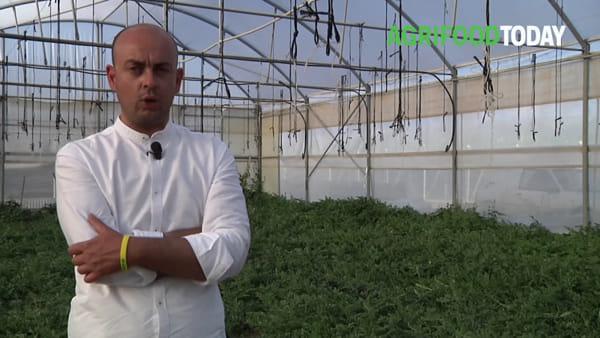 """""""Per non fuggire dalla Sicilia, abbiamo creato un'azienda agricola"""", la scommessa di 4 fratelli"""