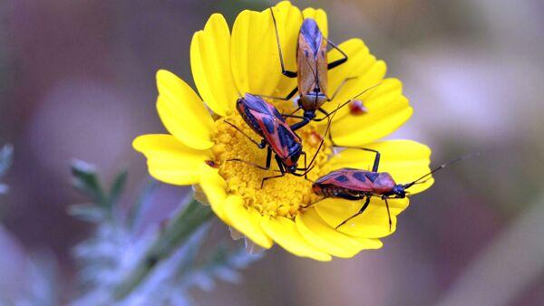 Non solo api, i pesticidi uccidono anche altri insetti fondamentali per i suoli