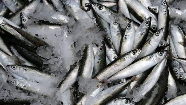 Pesci al mercurio, quali sono le specie più a rischio?