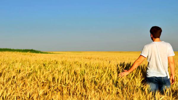 Il settore agricolo non riesce a svecchiarsi, pochi i giovani che decidono di coltivare la terra