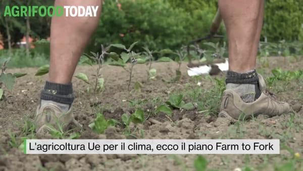"""Tg AgriFoodToday: """"Fiori a impatto zero"""", ecco il vivaio sostenibile e circolare"""