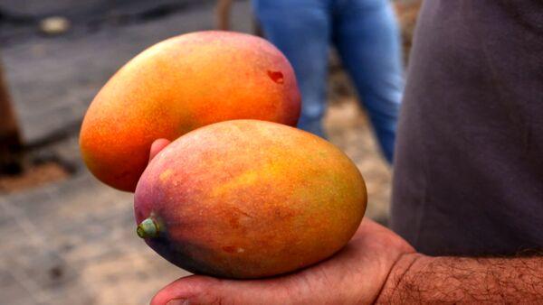 """""""Con il mio mango made in Italy ho portato i tropici in Sicilia"""""""