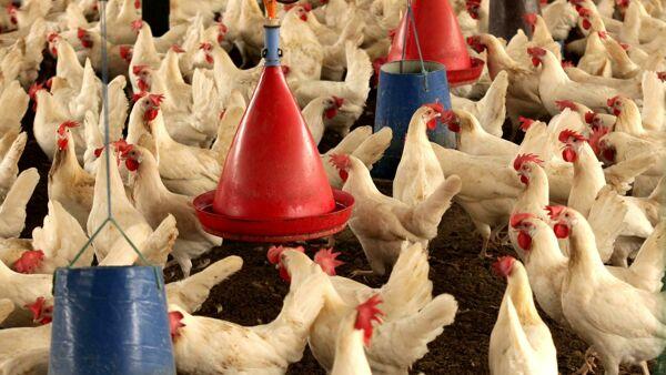 Berlino chiede che in Ue si segnali la provenienza delle uova anche nei prodotti che le contengono