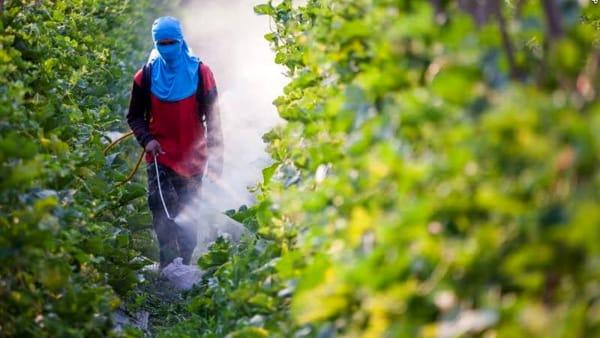 """L'Ue agli agricoltori: """"Dimezzate i pesticidi entro il 2030"""""""