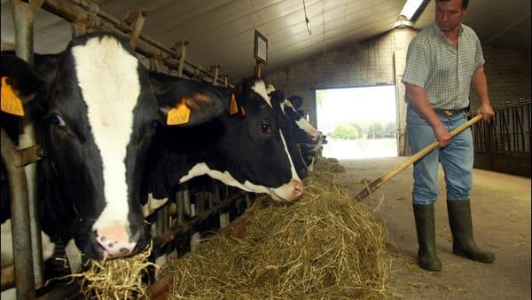 """""""Nelle nostre stalle nasce il latte Mugello"""""""