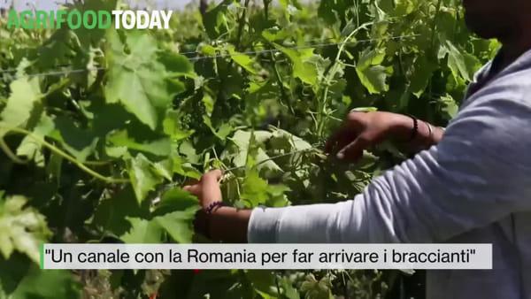 Il boom del riso made in Italy durante la pandemia