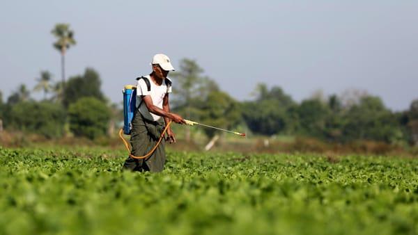 Con l'accordo Mercosur rischiamo di importare cibi contaminati da pesticidi banditi in Ue