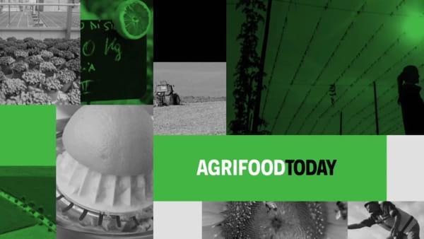 """Tg AgriFoodToday: nel """"cibo della salute"""" il tesoro dell'Appennino"""
