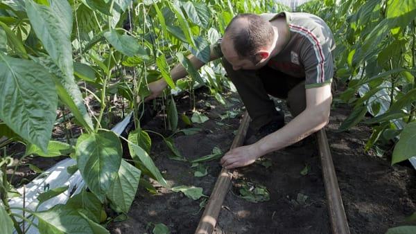 """""""Se l'Ue vuole puntare sulla sostenibilità deve aiutare i piccoli agricoltori, non l'agrobusiness"""""""
