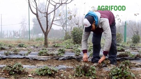 Dai disabili ai migranti, il sociale nei campi dà lavoro a 30mila persone