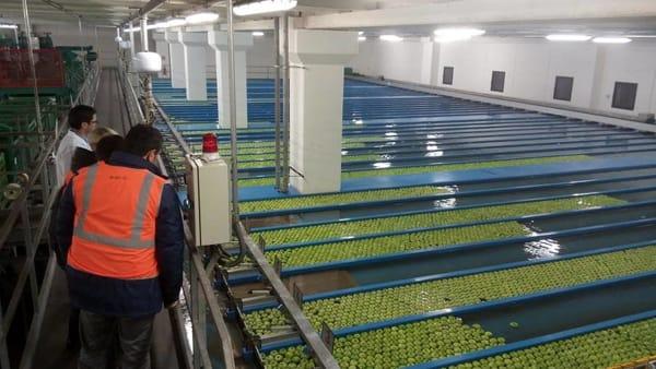 Tg AgriFoodToday: il magazzino 2.0 che conserva le mele e protegge l'ambiente