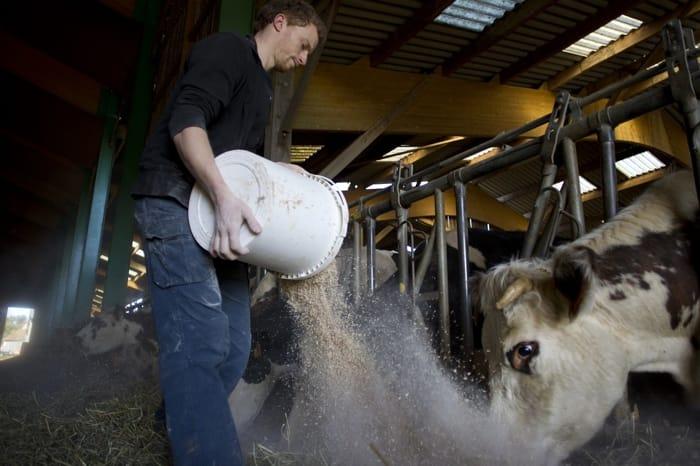 Arriva l'etichetta Ue sulla carne per sapere se è stato rispettato il benessere animale