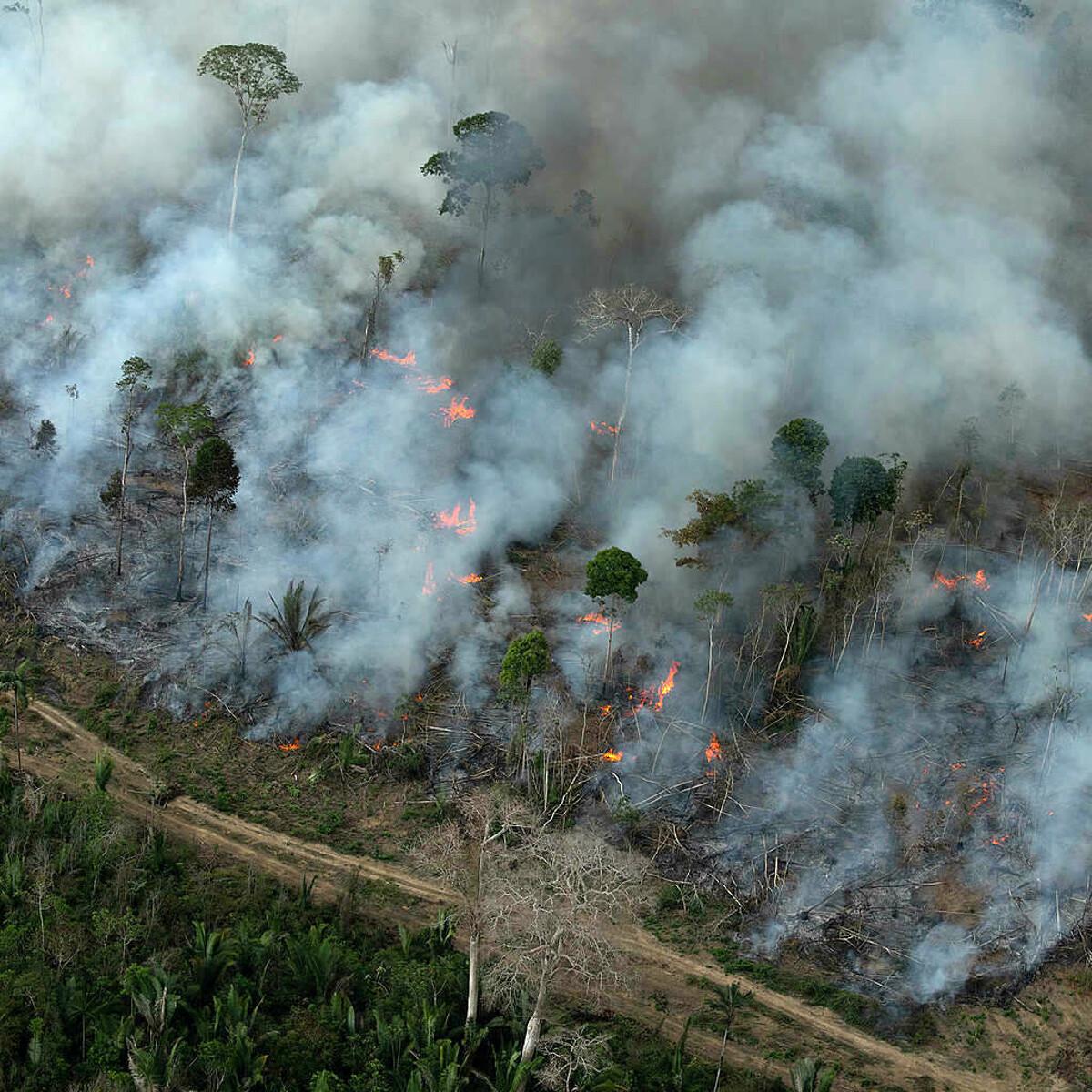 """""""L'Italia sta distruggendo l'Amazonia per la sua fame di soia"""""""