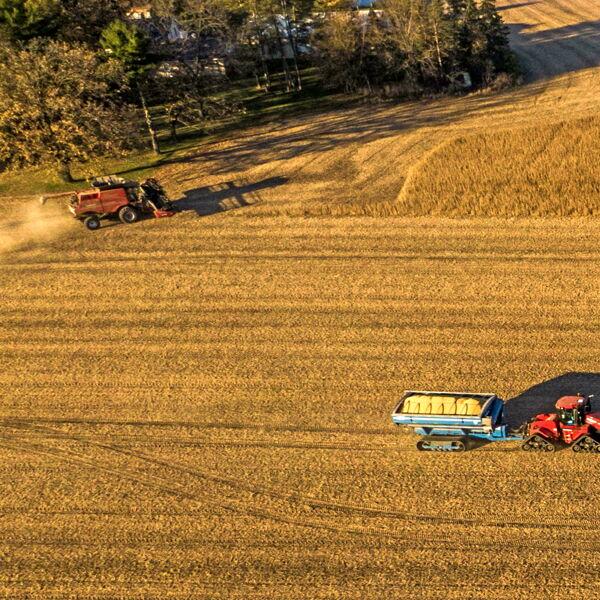 In Italia aumentano i terreni coltivati a soia ma cala la produzione
