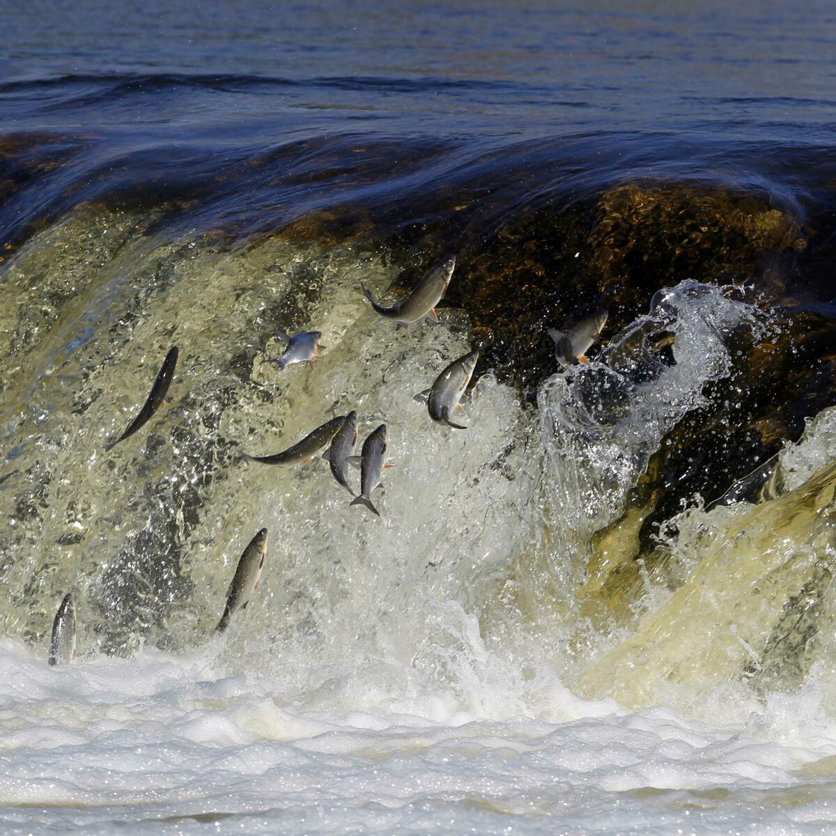 """Biodiversità delle acque dolci a rischio, ambientalisti: """"Troppe specie aliene immesse illegalmente"""""""