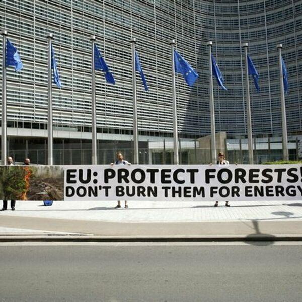 """Appello all'Ue: """"Le biomasse forestali non siano incluse tra le energie rinnovabili"""""""