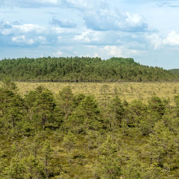 Londra paga i proprietari terrieri per fargli piantare alberi e tutelare così gli animali selvatici