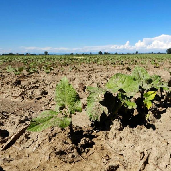 Cambiamenti climatici, gli italiani temono che le nostre eccellenze agroalimentari siano a rischio