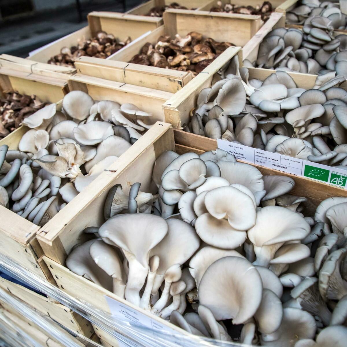 Anche i funghi commestibili contengono un po' di tossine, per questo è meglio cuocerli