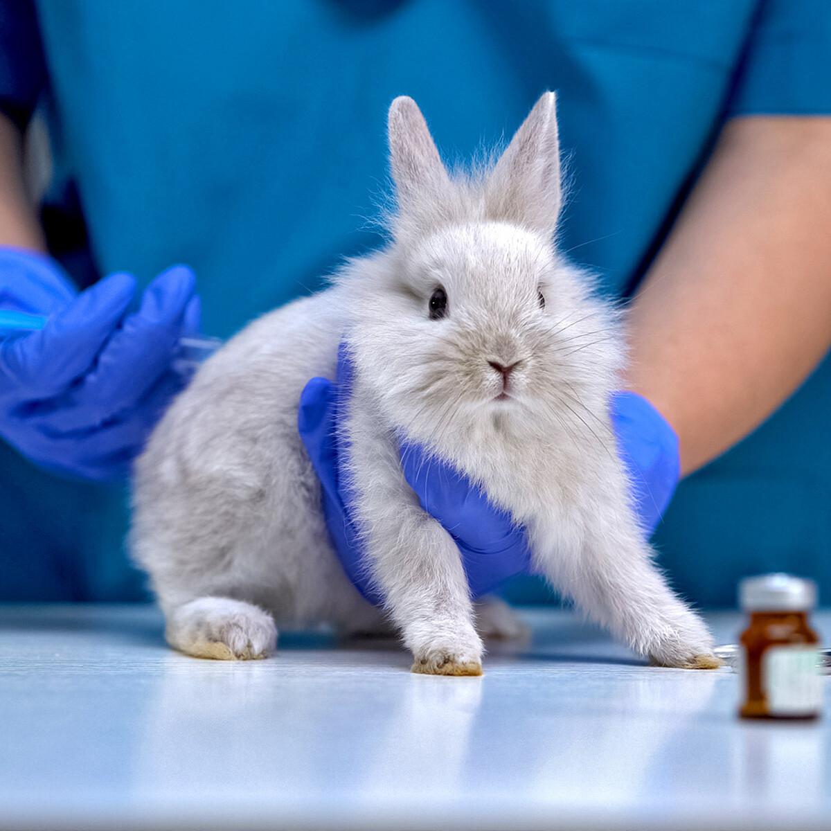 In Europa 12 milioni di animali uccisi per test scientifici: Strasburgo chiede lo stop