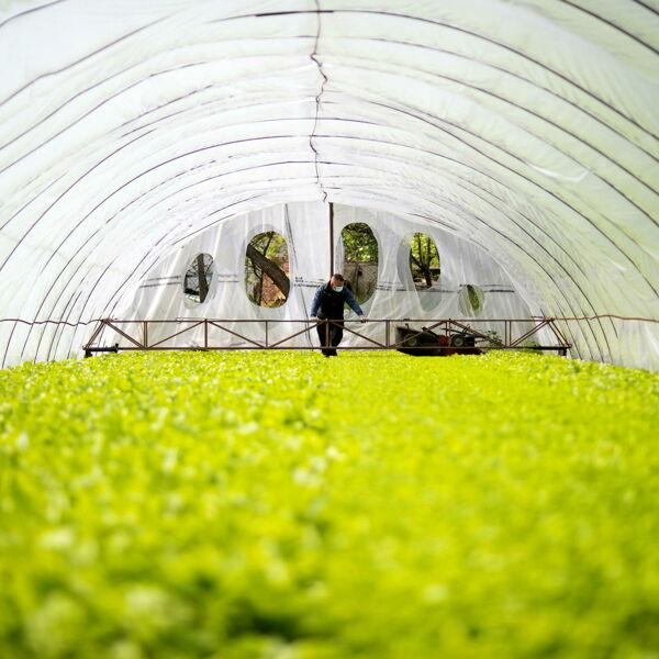 Così abbiamo ridotto del 30% i consumi di acqua e energia nei campi di tabacco