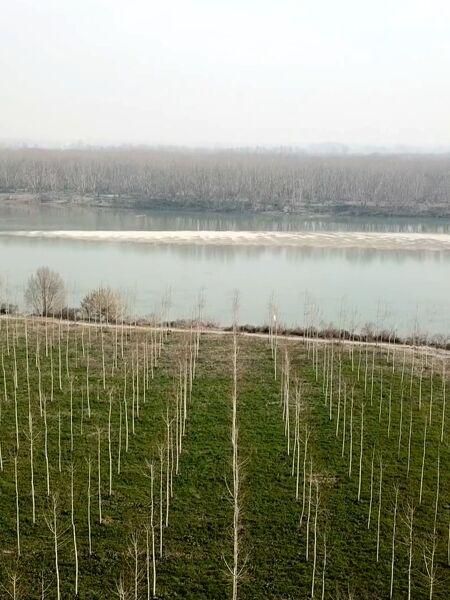 Come i pioppi ripuliscono la Pianura padana da smog e inquinamento